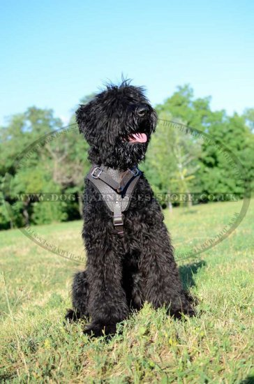 Black Russian Terrier Leather Harness for Protection Work