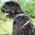 Black Russian Terrier Hand Painted Barbed Wire Designer Harness
