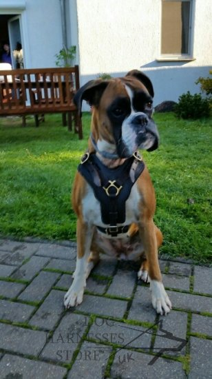 Padded Dog Harness for Boxer Agitation Training