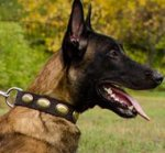 Vintage Dog Collar with Oval Brass Plates for Belgian Shepherd