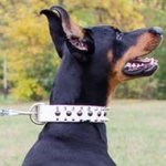 Doberman Pinscher Leather Collar White with Spikes and Studs
