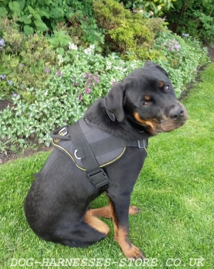 Bestseller! Rottweiler Harness of Nylon with Padded Chest Plate