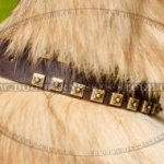 Tervuren Collar of Leather with Brass Studs, Caterpillar Design