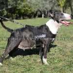 English Bull Terrier Harness - Working, Training, Walking, Sport