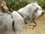 Leather Dog Harness for Southern Russian Shepherd Padded
