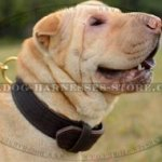Shar-Pei Collar of Two-Ply Leather for Safe Training and Control