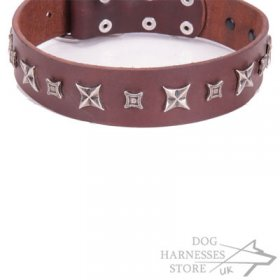 "Brown Leather Dog Collar FDT Artisan ""Stellar Fairy"""