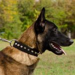 NEW Stylish Nylon Dog Collar for Malinois, with Steel Pyramids