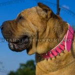 Collar for Shar-Pei Dog of Pink Leather with 2 Rows of Spikes