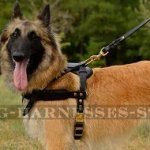Belgian Tervuren Dog Harness Leather for Pulling and Tracking