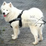 Dog Harness for Samoyede, Nylon K9 for Walks and Work