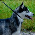 Best Training Collar for Husky Behavioral Issues Correction