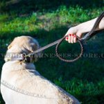 Best Dog Leash of Braided Design with Rolled Leather Handle