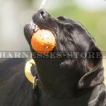 Labrador Dog Toy, Unsinkable Solid Rubber Ball on Rope for Water