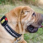 Shar-Pei Collar Nylon with ID Patches and Quick-Release Buckle