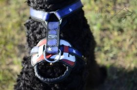 "Leather Dog Harness ""American Pride"" for Black Russian Terrier"