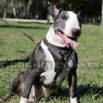Leather Chest Harness for Bull Terrier, Functional, Soft Padded
