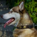 Siberian Husky Dog Collar of Leather in Vintage for Walking