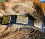 Wide Leather Dog Collar with Brass Plates for German Shepherd