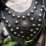 Royal Leather Dog Harness for English Bull Terrier Style