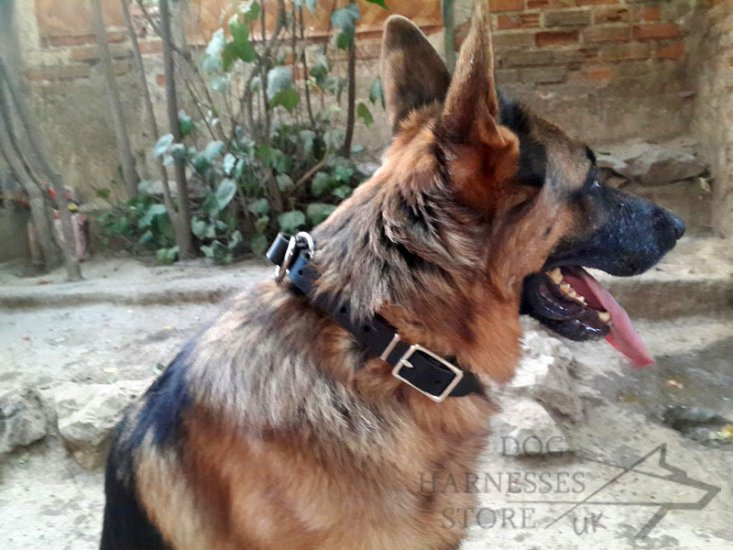 German Shepherd Slip Collar of Leather with Size Regulation