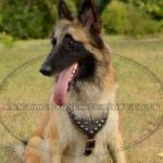 Belgian Tervuren Dog Harness of Royal Design and Premium Quality