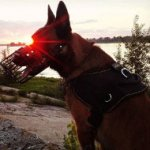 Belgian Malinois Harness Nylon, All-Weather and Super Functional