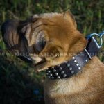 Shar-Pei Collar Leather Wide Decorated with Pyramids