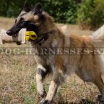 Belgian Tervuren Training Bite Tug Jute with Two Nylon Handles