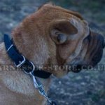 Shar-Pei Dog Collar of Narrow Leather, Classic Design