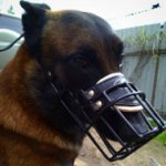 Muzzle for Belgian Malinois, Rubberized Wire for Winter Walks