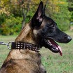 Spiked Leather Dog Collar with Pyramids for Belgian Malinois