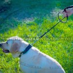 Best Leash for Big Dogs with Scissor-type Snap Hook & Braids