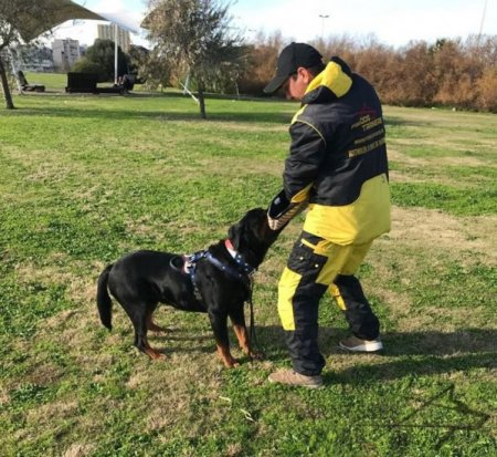 Dog Training Suit for IPO and Schutzhund Trials, NEW Design