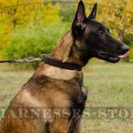 Leather Dog Collar for Malinois Training and Walking, 1.2 Inch