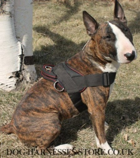 Bull Terrier Harness for Tracking and Pulling of Strong Nylon