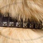 Tervuren Collar, Caterpillar Design, Leather with Nickel Studs