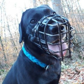 Labrador Basket Muzzle Rubber Covered for Winter and Summer