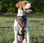 English Pointer Harness, Flame Style Fabulous Leather, Handmade