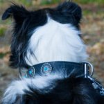 Collie Collar of Exceptional Design with Turquoise Stones Decor