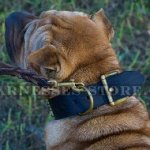Best Collar for Shar-Pei Control of Extra Wide Spiked Leather