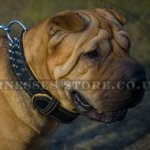 Shar-Pei Dog Collar of Royal Nappa Padded and Spiked Leather