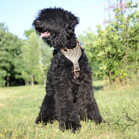 Black Russian Terrier Harness of Luxury Design and Top Quality