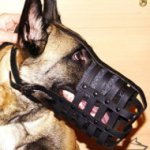 Belgian Malinois Leather Muzzle for Everyday Use