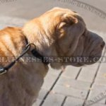 Best Collar for Shar-Pei Behavior Correction of Genuine Leather