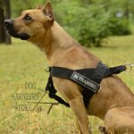 Pitbull Harness UK of Nylon for Easy Training and Walking