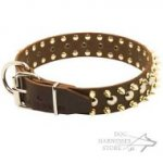 Leather Dog Collar with Exclusive Decoration, Spikes and Studs