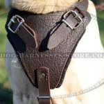 Labrador Dog Harness of Padded Leather for Walks & Training
