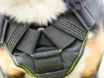Swiss Mountain Dog Harness of Nylon with Cushioned Chest Plate
