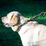 Quick Release Leather Dog Collar of Braided Design for Labs